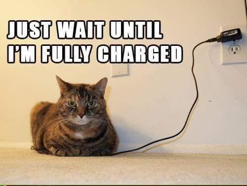 Cat Wait Funny